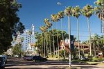 Foto #61871 - Tall palm trees on the Rambla
