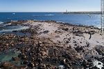 Foto #66490 - Aerial view of Isla Rasa and its sea lion colony