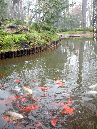 Photos of Japanese Garden at Prado quarter - Department and city of Montevideo - URUGUAY. Image #9870