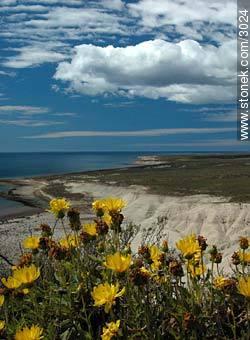 Seals and sea elephants in Punta Delgada. - Photographs of Peninsula Valdes - Province of Chubut - ARGENTINA. Image #3024