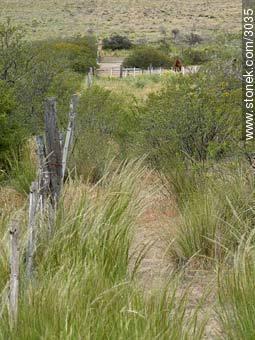Photographs of Peninsula Valdes - Province of Chubut - ARGENTINA. Image #3035