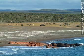 Photographs of Punta Tombo - Province of Chubut - ARGENTINA. Image #5472