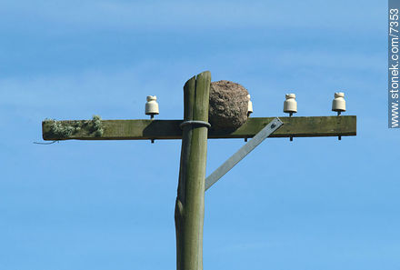 Ovenbird nest on top of an old post - Photos of the Uruguayan Countryside - URUGUAY. Image #7353
