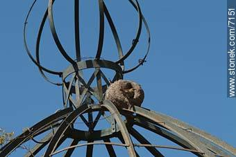 Ovenbird nest - Photos of Prado - Department and city of Montevideo - URUGUAY. Image #7151