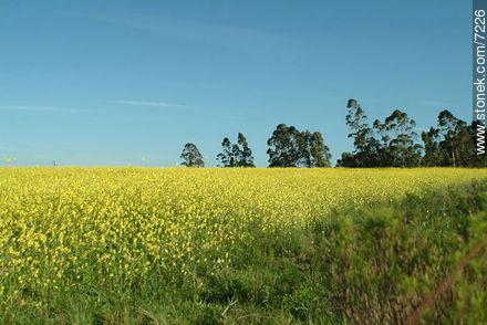 Photos of the Uruguayan Countryside - URUGUAY. Image #7226
