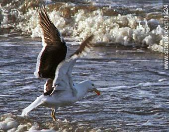 Photos of birds - Fauna - MORE IMAGES. Image #1224