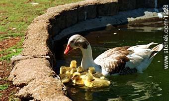 Photos of birds - Fauna - MORE IMAGES. Image #1228