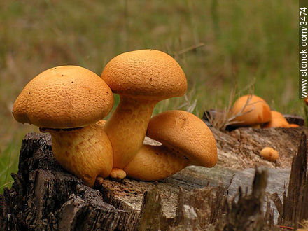 Wild fungus. - Photos of plants - Flora - MORE IMAGES. Image #3474