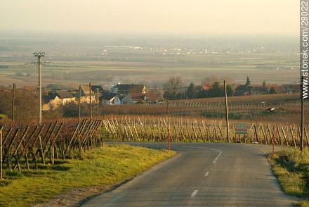 Alsace wine rout. Road D1bis - Photos of the Alsace wine route - Region of Alsace - FRANCE. Image #28022