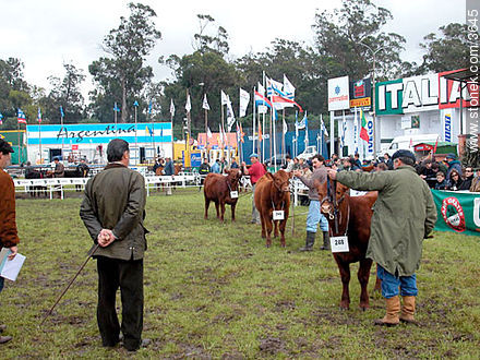 Photos of a Ranching Exhibition - Department and city of Montevideo - URUGUAY. Image #3645