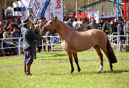 Photos of a Ranching Exhibition - Department and city of Montevideo - URUGUAY. Image #3633