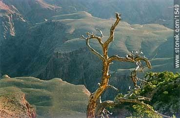 Photographs of Grand Canyon - USA-CANADA. Image #1549