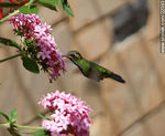Photo #22393 - Hummingbird