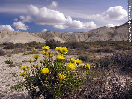 Cerro Avanzado - Photographs of Puerto Madryn - Province of Chubut - ARGENTINA. Image #22683