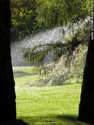 Backlight irrigation - More photos of Punta del Este - Punta del Este and its near resorts - URUGUAY. Image #17279