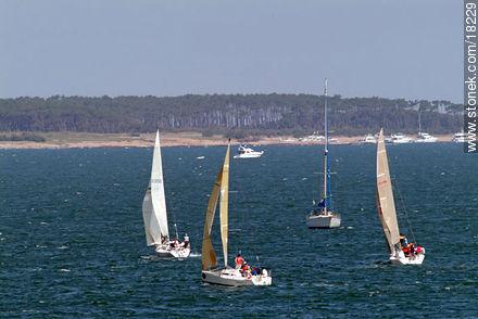 Photos of the open sea - Punta del Este and its near resorts - URUGUAY. Image #18229