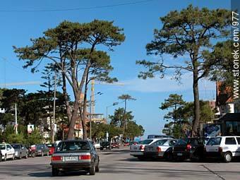 Photos of Carrasco quarter - Department and city of Montevideo - URUGUAY. Image #977