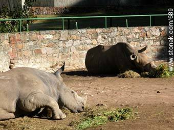 Rhinos resting. - Photos of the Zoo of Villa Dolores - Department and city of Montevideo - URUGUAY. Image #689