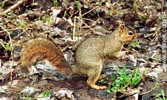 Squirrels everywhere - Photographs of Niagara Falls - USA-CANADA. Image #64