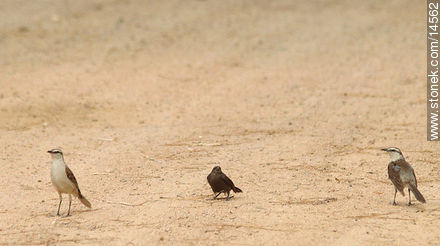 Photos of birds - Fauna - MORE IMAGES. Image #14562