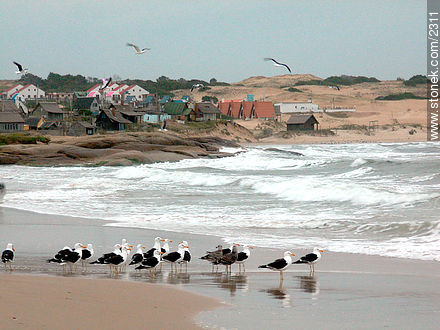 Photos of Punta del Diablo, URUGUAY. Image #2311