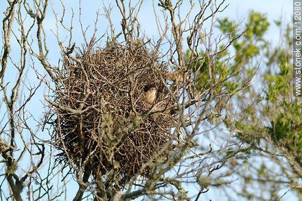 Photos of birds - Fauna - MORE IMAGES. Image #12080