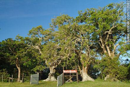 Photos of Monte de Ombues Montegrande - Department of Rocha - URUGUAY. Image #12082